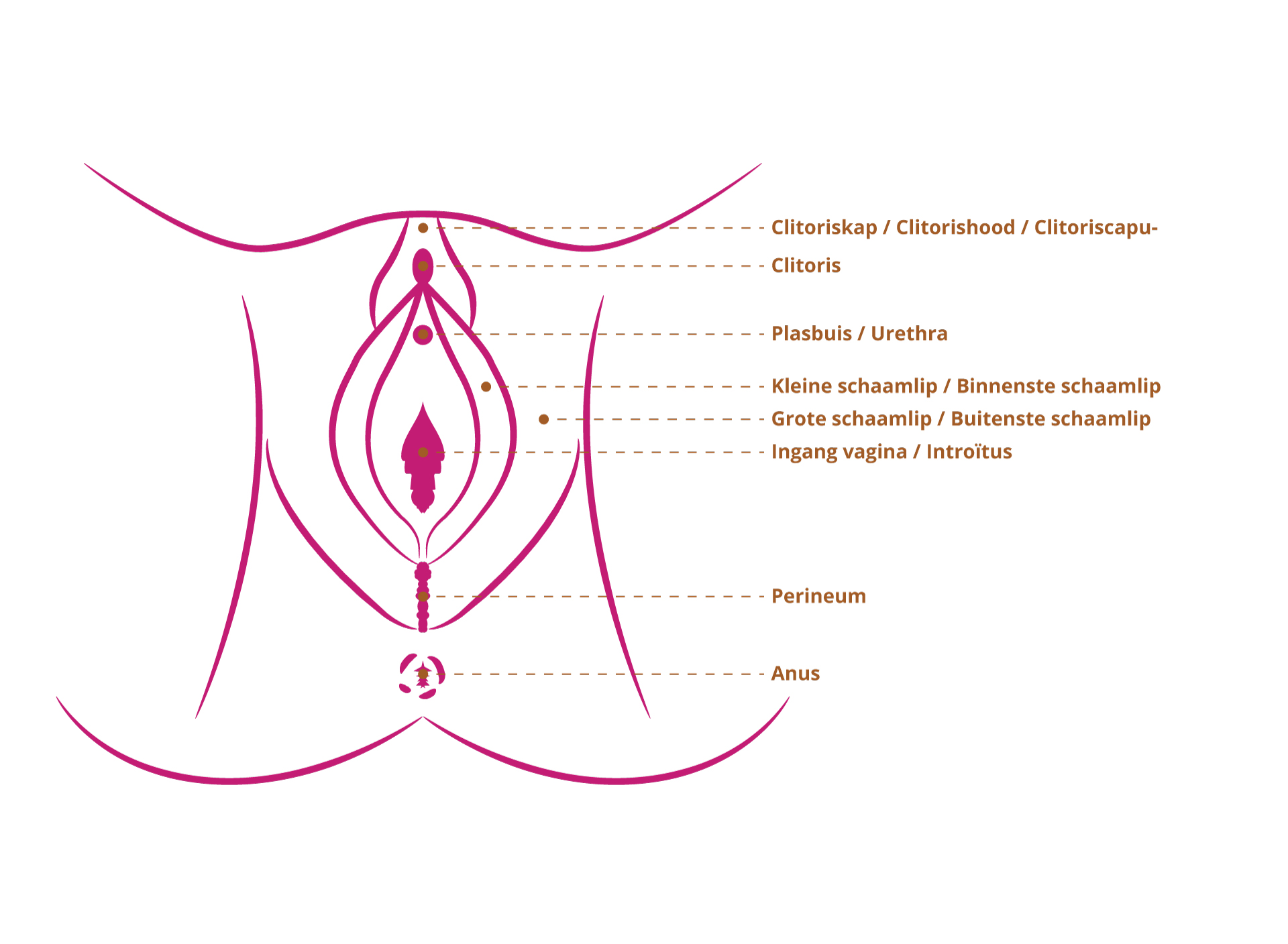 vagina (1)